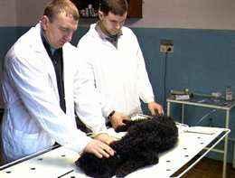 День ветеринарной службы поздравление фото 437